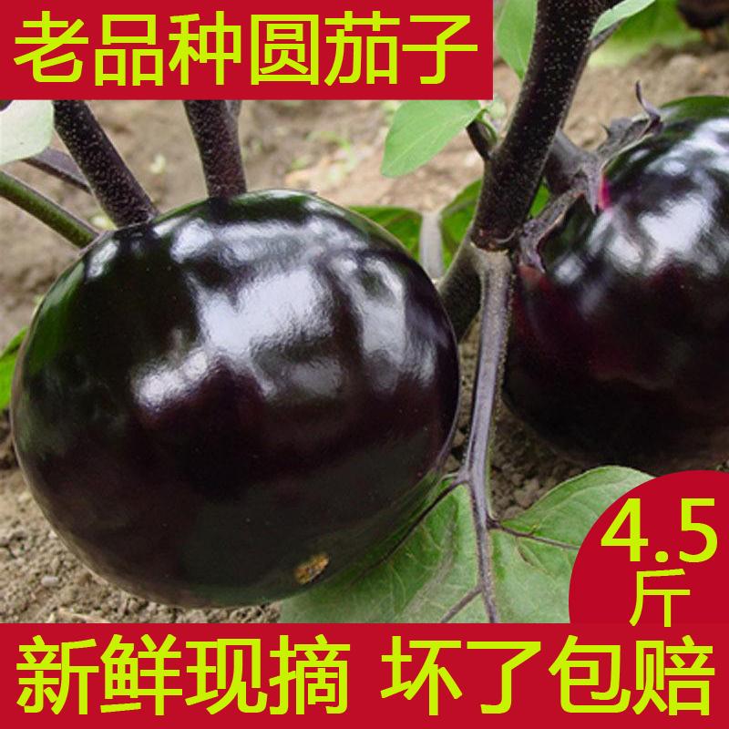 茄子新鲜山东农家自种蔬菜紫色圆茄子现摘茄子包邮非长茄子
