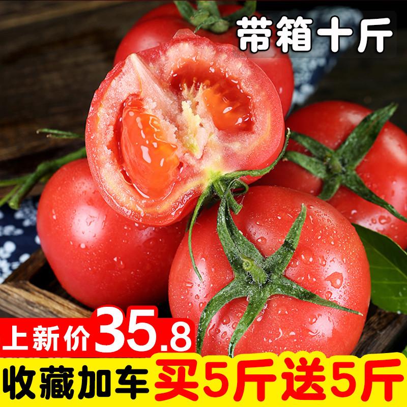 露天水果大西红柿沙瓤带箱10斤装新鲜蔬菜农家小番茄纯天然自然熟